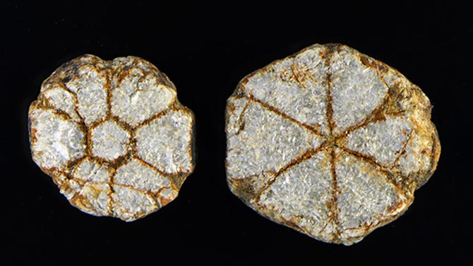 Muscovite trapiches or cherry blossom stones. Photo Nathan Renfro via GIA.